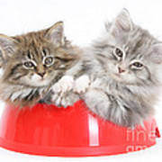 Kittens In A Food Bowl Art Print