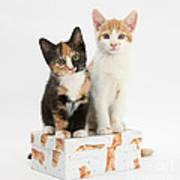 Kittens On Birthday Package Art Print