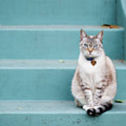 Kitty On Blue Steps Art Print