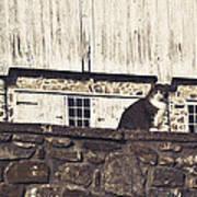 Kitty On Guard Art Print