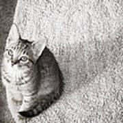 Kitty's Shadow Art Print