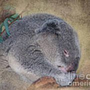 Koala Sleeping Art Print by Betty LaRue
