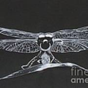 Lace Wings Art Print