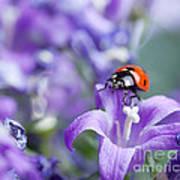 Ladybug And Bellflowers Art Print