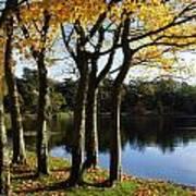 Lake And Trees, Mount Stewart, Co Down Art Print