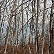 Lake Beyond The Trees Art Print