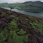 Lake District View From A Hillside Art Print