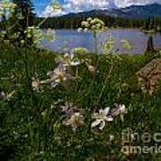 Lake Irwin Wildflowers Art Print