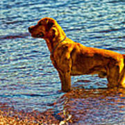 Lake Superior Puppy Art Print