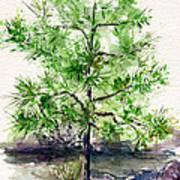 Lake Tahoe Tree Art Print
