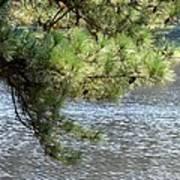 Lakeside Pines Art Print