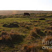 Landscape With Cow Grazing In The Field . 7d9935 Print by Wingsdomain Art and Photography