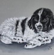 Landseer Pup Print by Patricia Ivy