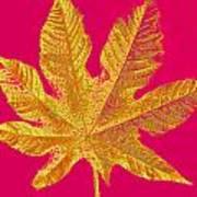 Large Leaf Photoart Art Print