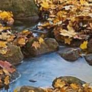 Last Signs Of Autumn 0438 Art Print