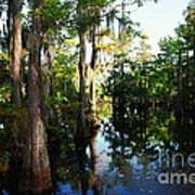 Late Afternoon At The Swamp Art Print