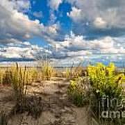 Late Summer Dunes Ocean City Art Print