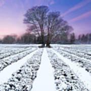 Lavender In Winter Art Print