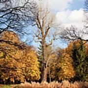 Lazienki Park Autumn Scenery Art Print