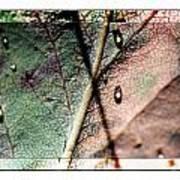 Leaf After Rain Art Print