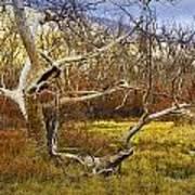 Leaf Barren White Tree Trunk In California No.1500 Art Print
