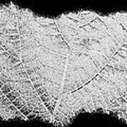 Leaf Design- Black And White Art Print
