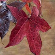 Leaf In Red Art Print