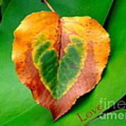 Leaf Leaf Heart Love Art Print