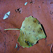 Leaf Libretto Art Print