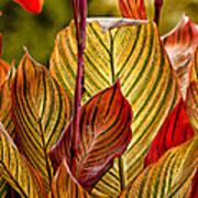 Leaf Lines Art Print