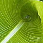 Leaf Tube Art Print