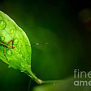Leafhopper 3 Art Print