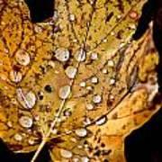 Leafwash Art Print