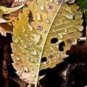 Leafy Tears Art Print