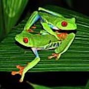 Leap Frog Art Print