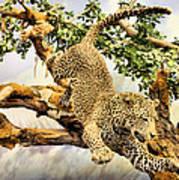Leaping Leopard Art Print