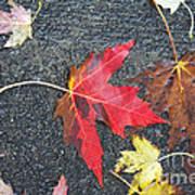 Leave The Leaves Art Print