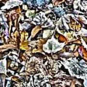 Leaves 02 Art Print