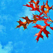 Leaves Against The Sky Art Print