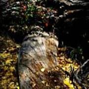 Leaves Around The Tree Trunks Art Print