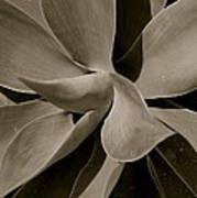 Leaves II - Mono Art Print
