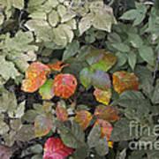 Leaves Of Three   Let It Be Art Print