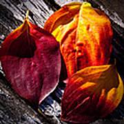 Leaves On The Deck Art Print