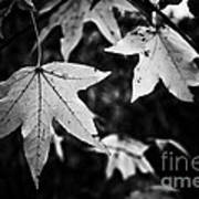 Leaves Without Color Art Print