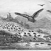 Lemming Migration Art Print