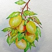 Lemons Art Print by Elena Mahoney