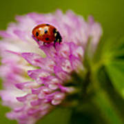 Lensbaby Ladybug On Pink Clover Art Print