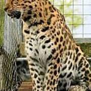 Leopard 5 Art Print