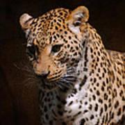 Leopard I Art Print