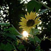 Let The Sun Shine Art Print